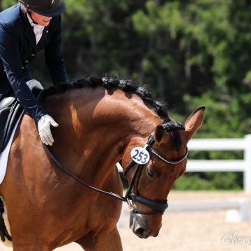 Cornerstone Dressage — Lynsey with Orion