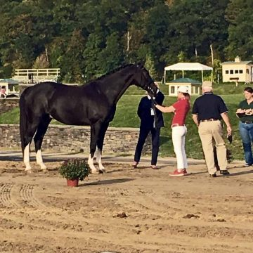 Saugerties:  Tattoo and Belinda at the Jog