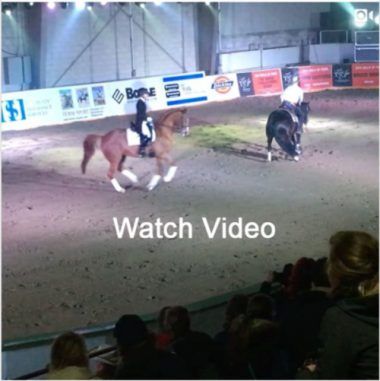 Can-Am All Breed Equine Expo — Something special!